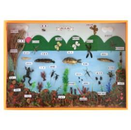 연못가의생물표본