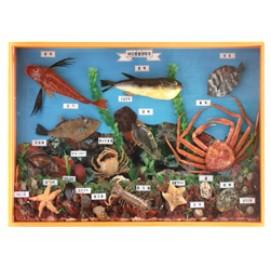 바다동물생태계표본
