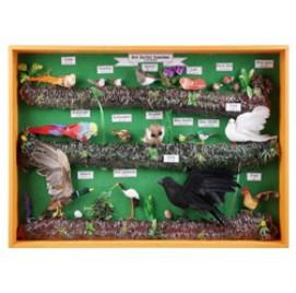 조류모형표본(영문)