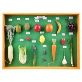 과일채소표본